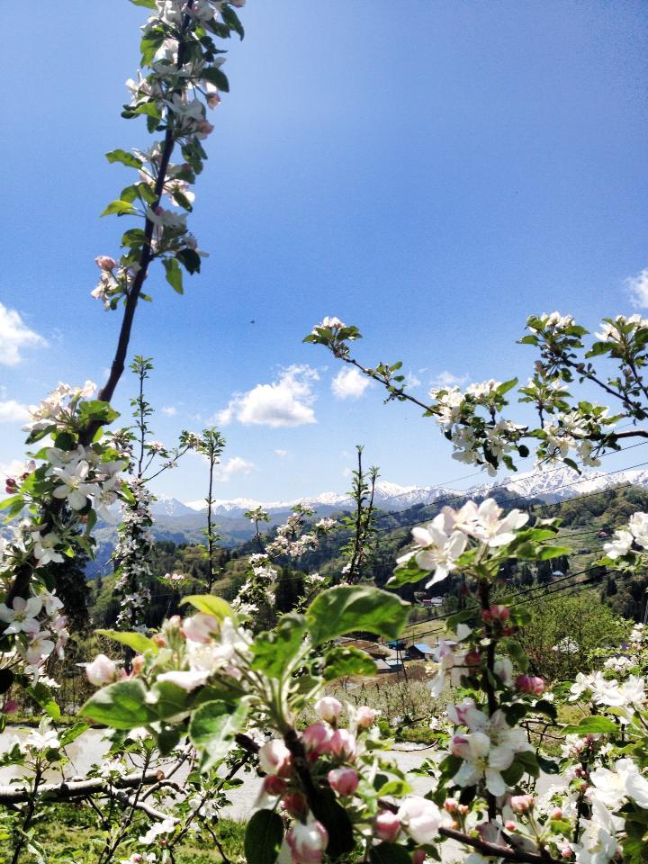 りんごの花摘みワークショップ開催します!