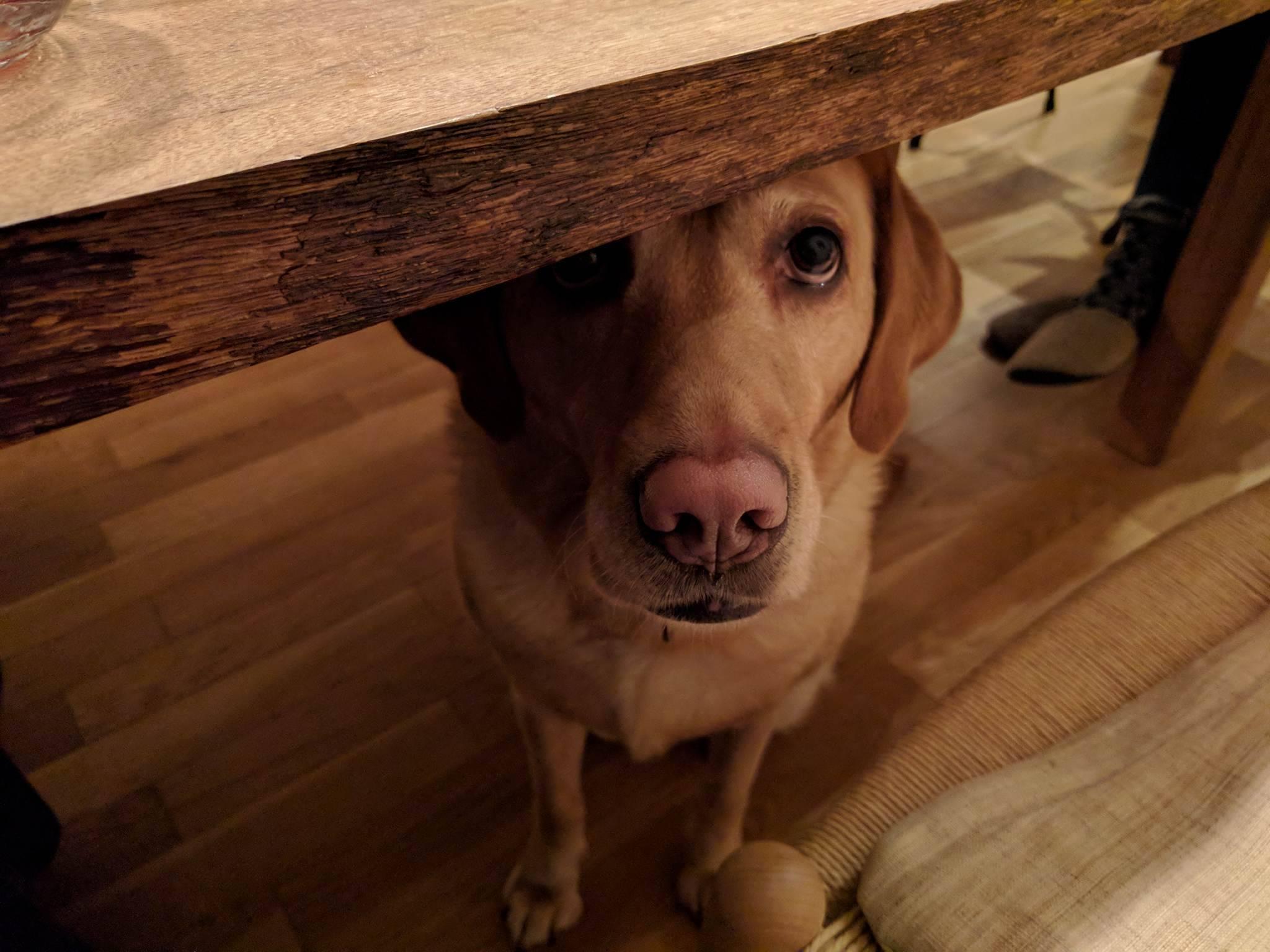 テーブルの下のジャム